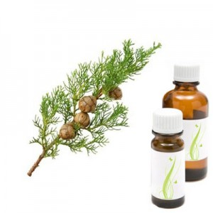 Cipresa, eterično olje (Cupressus sempervirens)