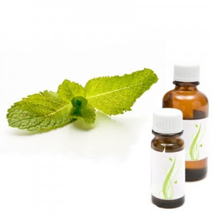 Zelena meta - spearmint, eterično olje (Mentha spicata)