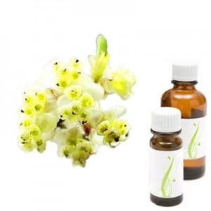 Tropska verbena - May chang, eterično olje (Litsea cubeba)