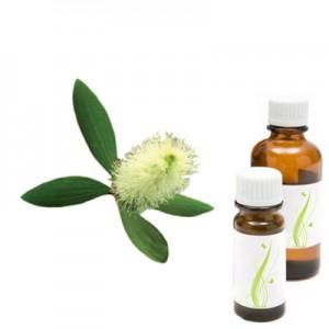 Cajeput - beli čajevec, eterično olje (Malaleuca leucadendron)