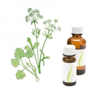 Janež, eterično olje (Piminella anisum)