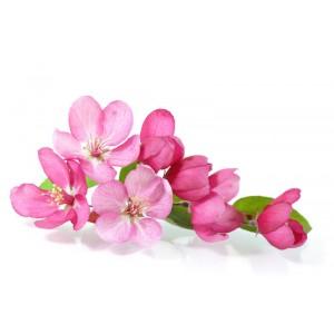 Cvetovi češenj (naravno identična dišava)