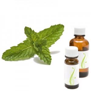 Poprova meta - peppermint, eterično olje (Mentha piperita)
