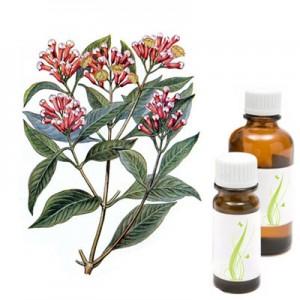 Nageljnove žbice, eterično olje (Caryophyllus aromaticus)