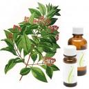 AMIRIS - SANDALOVINA (Amyris balsamifera)