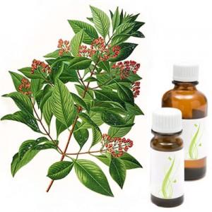 Amiris - sandal, eterično olje (Amyris balsamifera)
