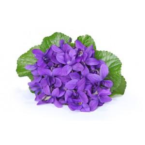 Dišeča vijolica (Parfumsko olje)